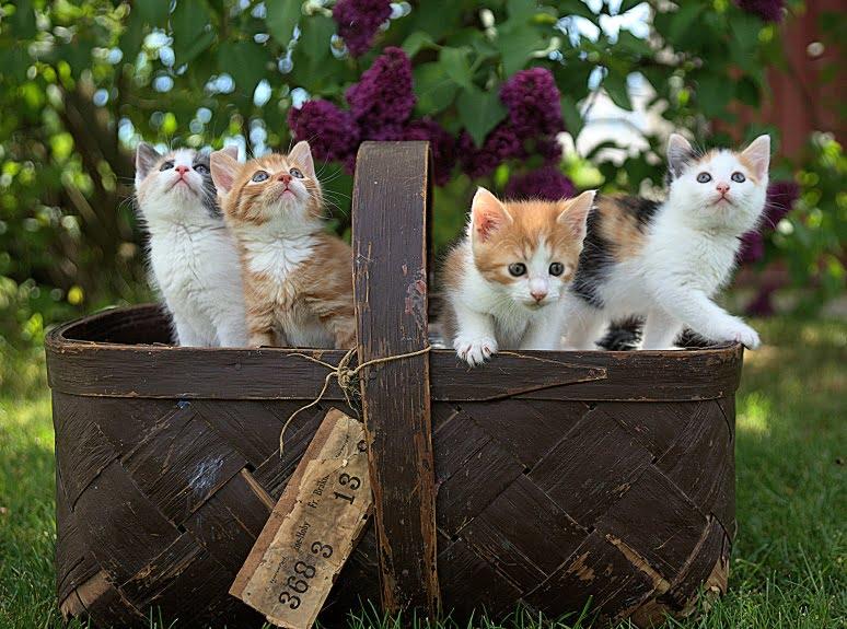 Klasyfikator rozpoznający małe koty